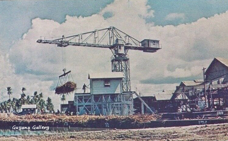 Albion Estate 1950
