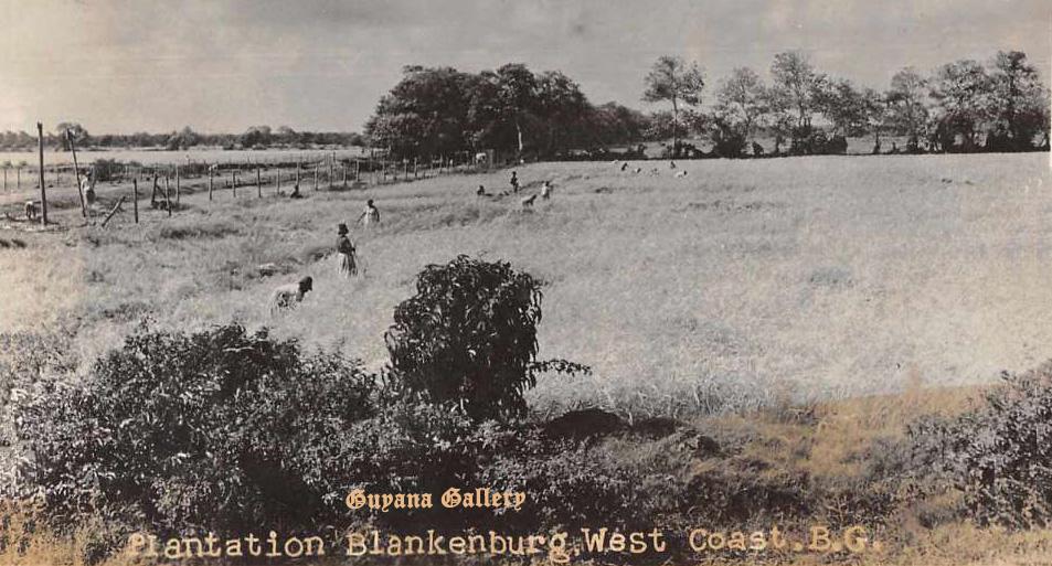 Blankenburg Village, West Coast Demerara 1932 - Copy